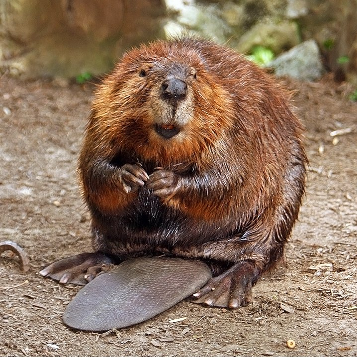 Century Beaver - Photo by Steve from Washington, DC, USA